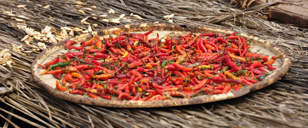Chilli's drying on the roof of a hut in a Hmong (Hill Tribe) village   ラオス北部に住む山岳民族、ハモンの村で、屋根の上に干されていた真っ赤な唐辛子を見つけた
