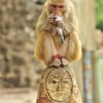 Mt Popa Monkey