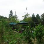 菜園に囲まれた田舎屋が