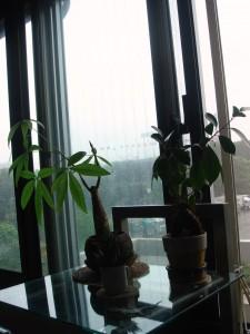 出発の朝: 雨の明治公園