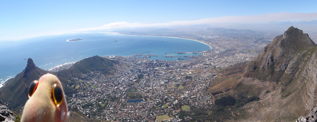 The stunning view from Table Mountain overlooking Capetown and Cape of Good Hope. The last known whereabouts of Pchan...RIP!