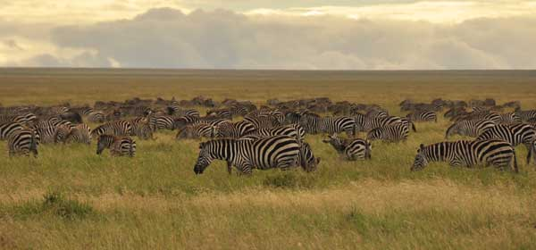 The endless plains of the Serengeti - where literally hundreds of thousands of animals roam!