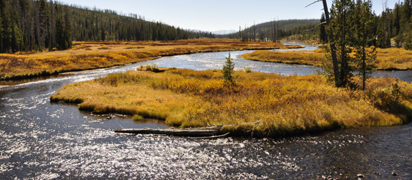 A typical scene from our drive down through Montana and Wyoming. The colours of fall transforming the landscape dramatically everywhere, while small streams and rivers thread their way along the flat, grass covered valley floors - makes me want to take up flyfishing!