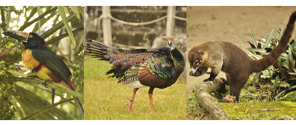 A few of the fascinating creatures that rule the jungle's around the Mayan ruins of Tikal in Guatemala. Macau's, Pheasants, Long nosed bears, Spider & Howler Monkeys, Squirrels and Tarantula's all calmly get about doing their thing pretty much oblivious to the human intrusion - its a veritable zoo. Oh and the ruins were fantastic too!
